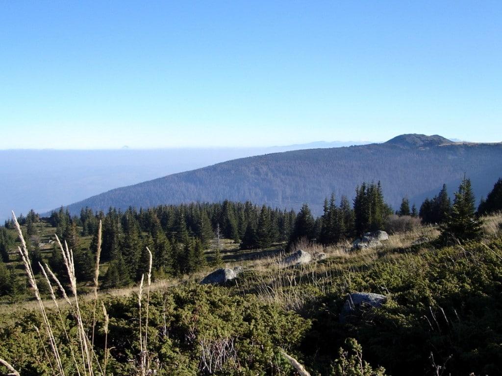 Биосферен резерват Бистришко бранище